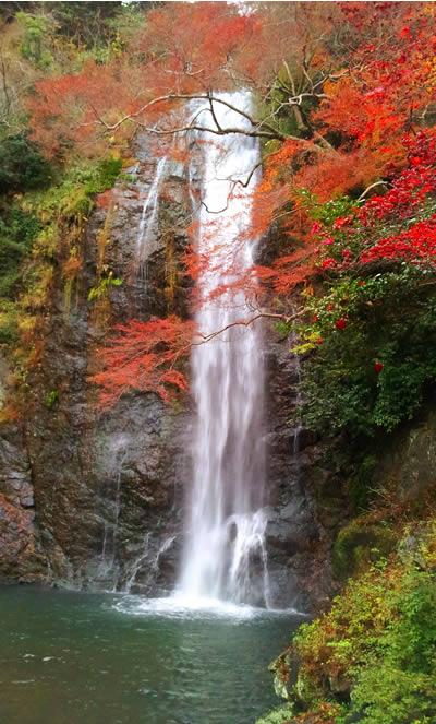 もみじと滝の写真